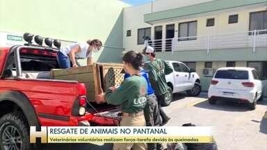 Voluntários realizam força-tarefa para resgatar animais das queimadas - Profissionais veterinários estão atuando na região do Pantanal.