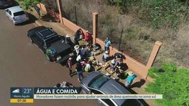 Moradores fazem mutirão para ajudar animais de área queimada em Ribeirão Preto - Área superior a dez campos de futebol foi atingida por fogo na zona sul.
