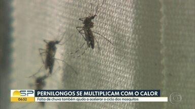 Pernilongos se multiplicam e irritam moradores de São Paulo - Calor e pouca chuva ajudam a acelerar o ciclo dos mosquitos. Dermatologista recomenda dar tapas na picada, e evitar a coceira.