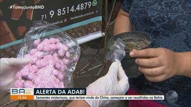 Agência de Defesa Agropecuária da Bahia investiga envio de sementes através dos Correios - A origem e a composição do material ainda são desconhecidas.