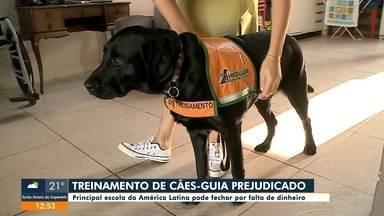 Principal escola de cães-guia da América Latina pode fechar por falta de dinheiro - Principal escola de cães-guia da América Latina pode fechar por falta de dinheiro