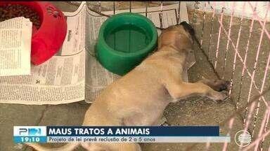 Lei que pune maus tratos a animais é aprovada e prevê prisão de até 5 anos - Lei que pune maus tratos a animais é aprovada e prevê prisão de até 5 anos