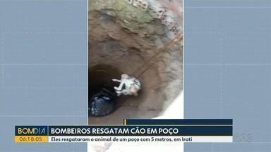 Cachorro é resgatado de dentro de um poço - Eles resgataram o animal de um poço com 5 metros, em Irati