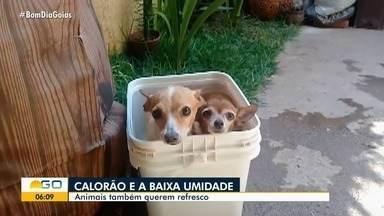 Animais tentam se refrescar no calor de Goiás - Veterinária e biólogo explicam que os bichinhos também sofrem com o tempo quente e seco.