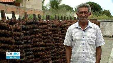 Produção de fumo em Alagoas volta a crescer, segundo o IBGE - Esse crescimento é animador para quem depende a produção de fumo no estado.