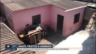 Duas pessoas são presas pela nova lei de maus-tratos contra animais - Em um dos casos, mulher foi flagrada batendo em cadelas.