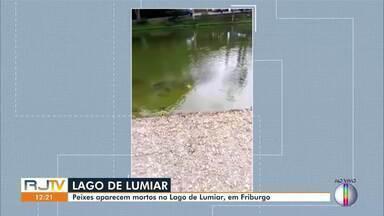 Peixes aparecem mortos no Lago de Lumiar, em Nova Friburgo, no RJ - No registro feito por uma moradora é possível ver os peixes se debatendo à beira do lago.