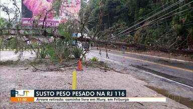 Árvore é retirada da pista após tombar na RJ-116 em Nova Friburgo, no RJ - A estrada em Mury chegou a ficar fechada, mas agora já está com caminho livre.