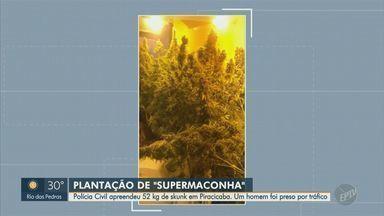 Dise prende suspeito de tráfico de drogas em Piracicaba e apreende 50 kg de 'supermaconha' - Polícia prendeu homem de 37 anos ao cumprir mandado em imóvel com controles de temperatura, umidade e odorizador. Espaço no Nova Piracicaba tinha 631 vasos da cultivo.