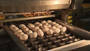 Criadores baianos comemoram alta da arroba do boi e aumento no consumo de ovos - Confira destaques do agronegócio na região sudoeste do estado e em Feira de Santana.