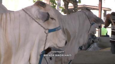 Animais da Expoagro passam por protocolo de segurança sanitária - Cuidados são para evitar a disseminação da Covid-19.