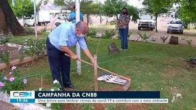 Católicos plantam árvores no dia de finados em homenagem aos mortos pela Covid-19 - Confira mais notícias em g1.globo.com/ce