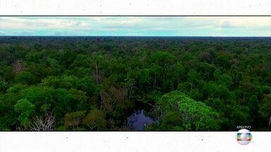 Projeto Educação: professor de biologia tira dúvidas sobre sucessão ecológica - Poluição e desmatamento podem influenciar a sucessão ecológica.