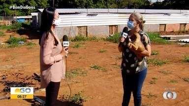 Abrigo que cuida de quase 400 cães e 100 gatos precisa de ajuda, em Goiânia - Veja como auxiliar.
