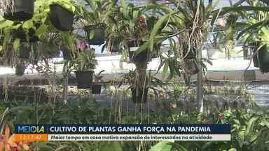 Cultivo de plantas ganha força na pandemia - Com mais tempo em casa, dedicação dos moradores aos vasos e jardins cresceu.