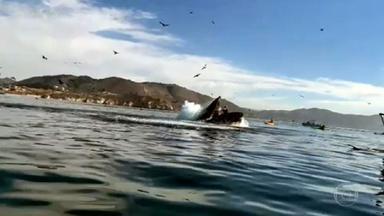VÍDEO: 'Não sabíamos que estávamos dentro da boca da baleia', diz americana após susto - Duas amigas faziam passeio de caiaque quando uma baleia veio em direção a elas, com a boca aberta. Imagem impressiona.