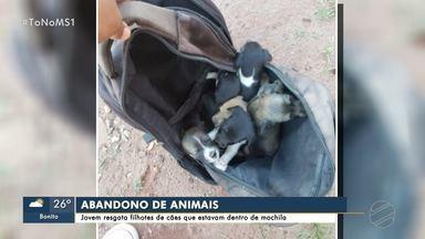 Jovem resgata filhotes de cachorro que estavam dentro de mochila em Campo Grande - História de abandono de animais teve final feliz