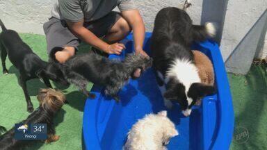 Quadro 'Casa Prática' mostra como ajudar seu cachorro a enfrentar os dias de calor - Brincadeiras com água é uma opção para os Pets se refrescarem.