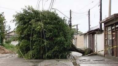 Árvores caíram e casas ficaram destelhadas em Itanhaém - Temporal e vendaval causaram estragos na cidade.