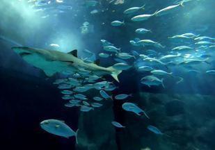 Assista ao Terra da Gente deste sábado (21/11) na íntegra - Aventura no aquário, pescaria à moda sertaneja e receita de feijão tropeiro estão entre as atrações.