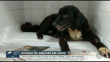 Enxame de abelhas ataca canil e mata cinco cachorros em Nova Odessa - Mais cinco cães estão internados por conta das picadas de abelha.