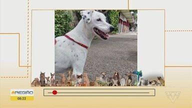 É o bicho: Médico veterinário fala dos perigos da obesidade em animais - Quadro também mostra cachorro para doação e uma cadelinha perdida.
