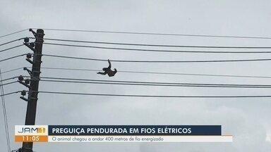 Preguiça é resgatada após ficar pendurada em fios elétricos - Animal chegou a andar 400 metros.