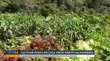 Cultivar horta em casa virou hábito na pandemia - O passatempo distrai a mente e garante alimentos frescos.