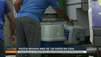 Polícia resgata mais de 160 gatos de casa em Ponta Grossa - Casal foi preso em flagrante por maus-tratos a animais.