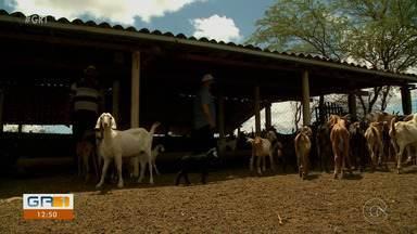Comunidades de Lagoa Grande se desenvolvem com apoio de técnicos do IPA - Neste domingo, é o Dia do Extensionista Rural, profissional que oferece assistência técnica ao homem do campo.