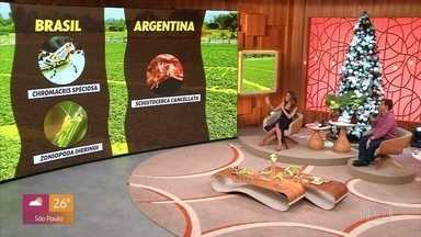 Nuvem de gafanhotos assusta argentinos e gaúchos - O veterinário André Sena explica quais são as espécies que atacam as lavouras e como os insetos se comportam