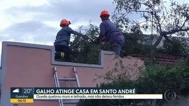 Árvore cai em cima de casa em Santo André - Muro e telhado foram atingidos, ninguém se feriu.