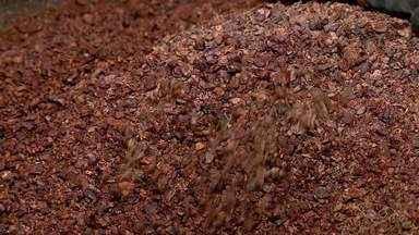 Família do ES produz chocolate artesanal e investe desde o plantio do cacau - Assista.