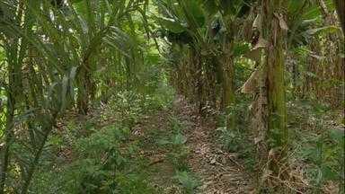 Veja a importância da diversidade de plantas no cultivo de alimentos - A sincronia observada na floresta pode servir de exemplo para a produção de alimentos. Exemplo disso é o modelo de agrofloresta.