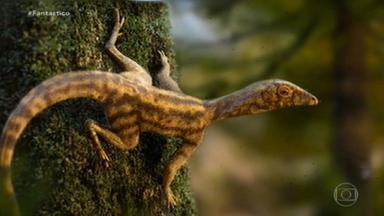 Fóssil encontrado no Brasil ajuda a desvendar mistérios da evolução dos pterossauros - Uma questão intriga cientistas do mundo todo: como surgiram os pterossauros, répteis voadores da era dos dinossauros? A resposta pode estar no brasileirinho ixalerpeton polesinensi.