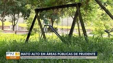 Mato alto em áreas públicas geram reclamações em Presidente Prudente - Telespectadores relatam o problema e cobram providências.