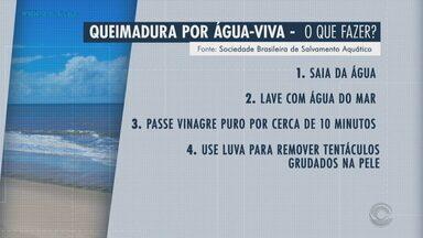 Especialistas alertam para o cuidado com águas-vivas no litoral gaúcho - Assista ao vídeo.