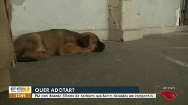 Filhotes de cachorro são abandonados em unidade da PM e recebem cuidados dos policiais - Assista.
