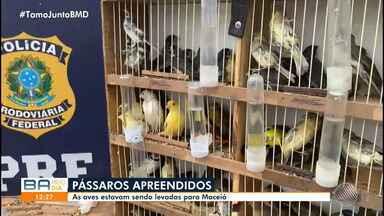 PRF resgata mais de 100 pássaros silvestres e exóticos durante fiscalização na BR-116 - As aves vinham de São Paulo e estavam sendo levadas a Maceió. O homem que estava com os animais foi levado à delegacia, onde foi ouvido e liberado posteriormente.
