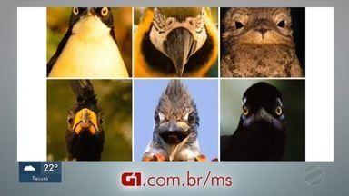 Fotos de pássaros 2x4 - Fotos de pássaros 2x4