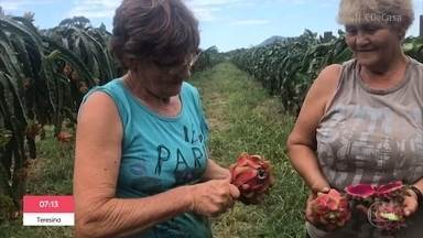 Belezas da Terra: Maria e Terezinha são produtoras de pitaia - Irmãs mostram a força do agronegócio do Brasil e contam que trabalham de sol a sol e não pararam nem durante a pandemia