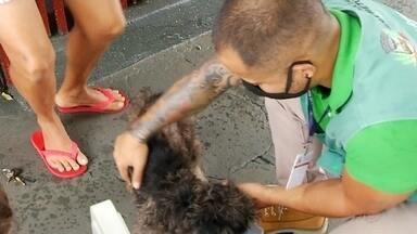Prefeitura de Rio Preto faz campanha de prevenção e combate à leishmaniose - A Prefeitura de Rio Preto (SP) está fazendo uma campanha de prevenção e combate à leishmaniose na cidade. Em 2020, 61 cães tiveram a doença.