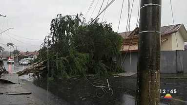 Chuva causa estragos em cidades da região - Temporal derrubou árvores e postes.