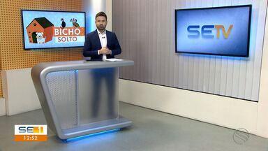 Confira o 'Bicho Solto' deste sábado (06/02) - Confira o 'Bicho Solto' deste sábado (06/02).