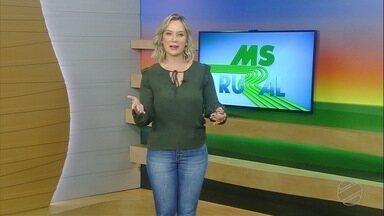 MS Rural - domingo - 14/02/21 - MS Rural - domingo - 14/02/21