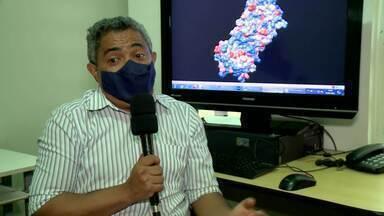 Pesquisadores descobrem propriedades inibidoras de coronavírus no jaborandi - Pesquisadores descobrem propriedades inibidoras de coronavírus no jaborandi