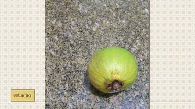 Que fruta é essa? Biólogo tira dúvida de telespectadora - Que fruta é essa? Biólogo tira dúvida de telespectadora.