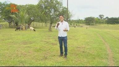 Reveja na íntegra o Amapá Rural deste domingo 14/02/2021 - Reveja na íntegra o Amapá Rural deste domingo 14/02/2021