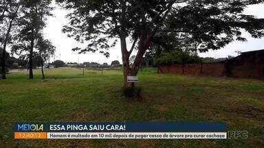 Homem é multado em R$ 10 mil depois de pegar casca de árvore pra curar cachaça - A árvore é protegida por lei. Caso foi em Cianorte.