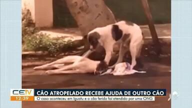 Cão recebe ajuda de outro cão após ser atropelado - Saiba mais em g1.com.br/ce